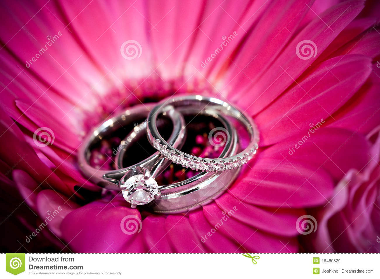 Rings on purple flower stock image. Image of bouquet - 16480529