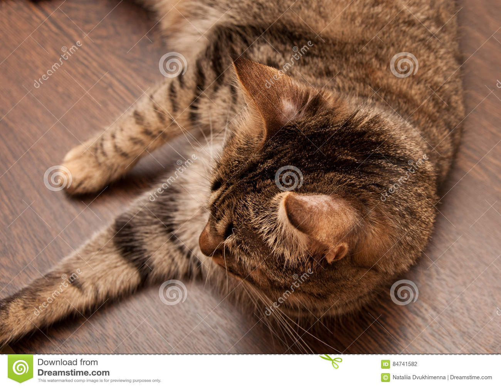 Ringworm в коте