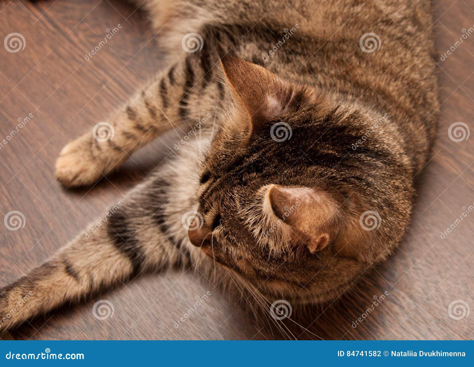 Ringworm w kocie