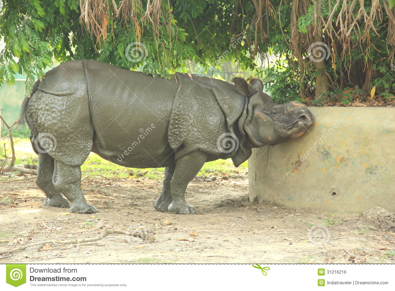 Rino In A Zoo. Royalty Free Stock Image - Image: 31216216