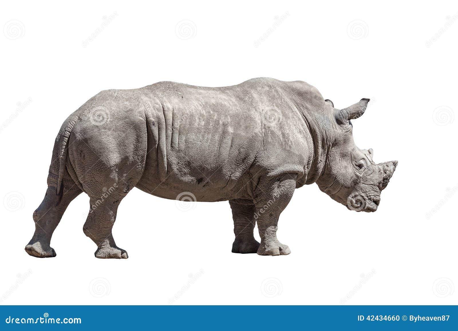 Rinoceronte aislado en blanco
