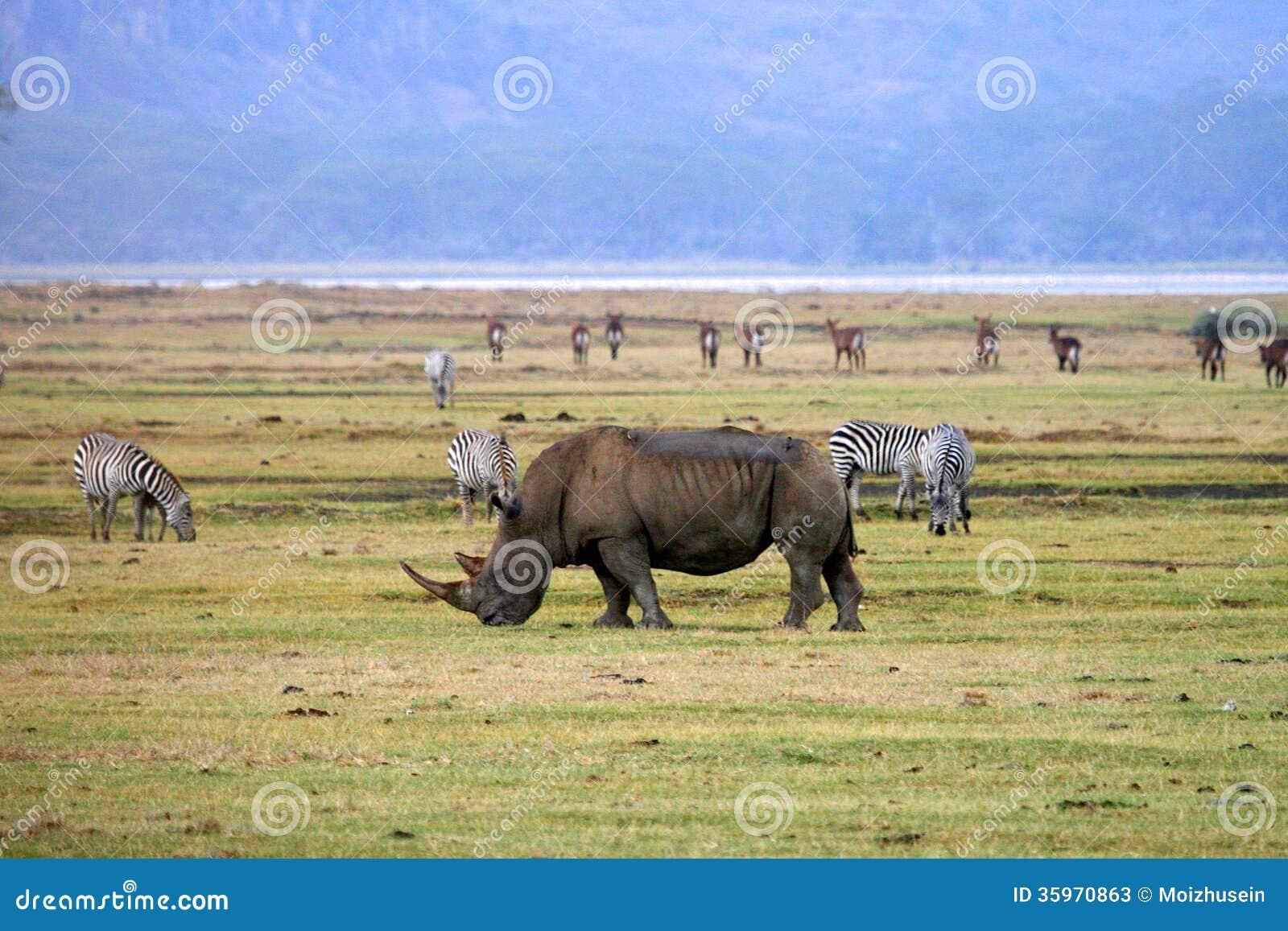 Rinoceronte en el parque nacional de Tanzania