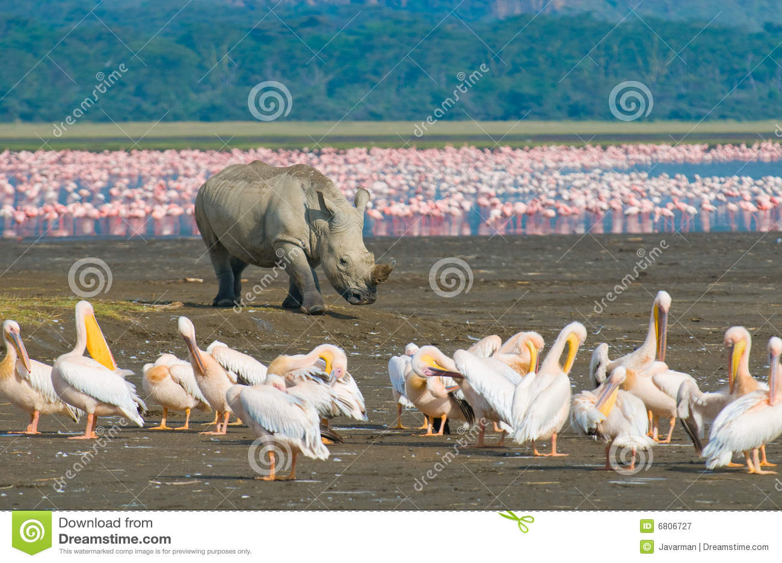 Rinoceronte nella sosta nazionale di nakuru del lago, Kenia