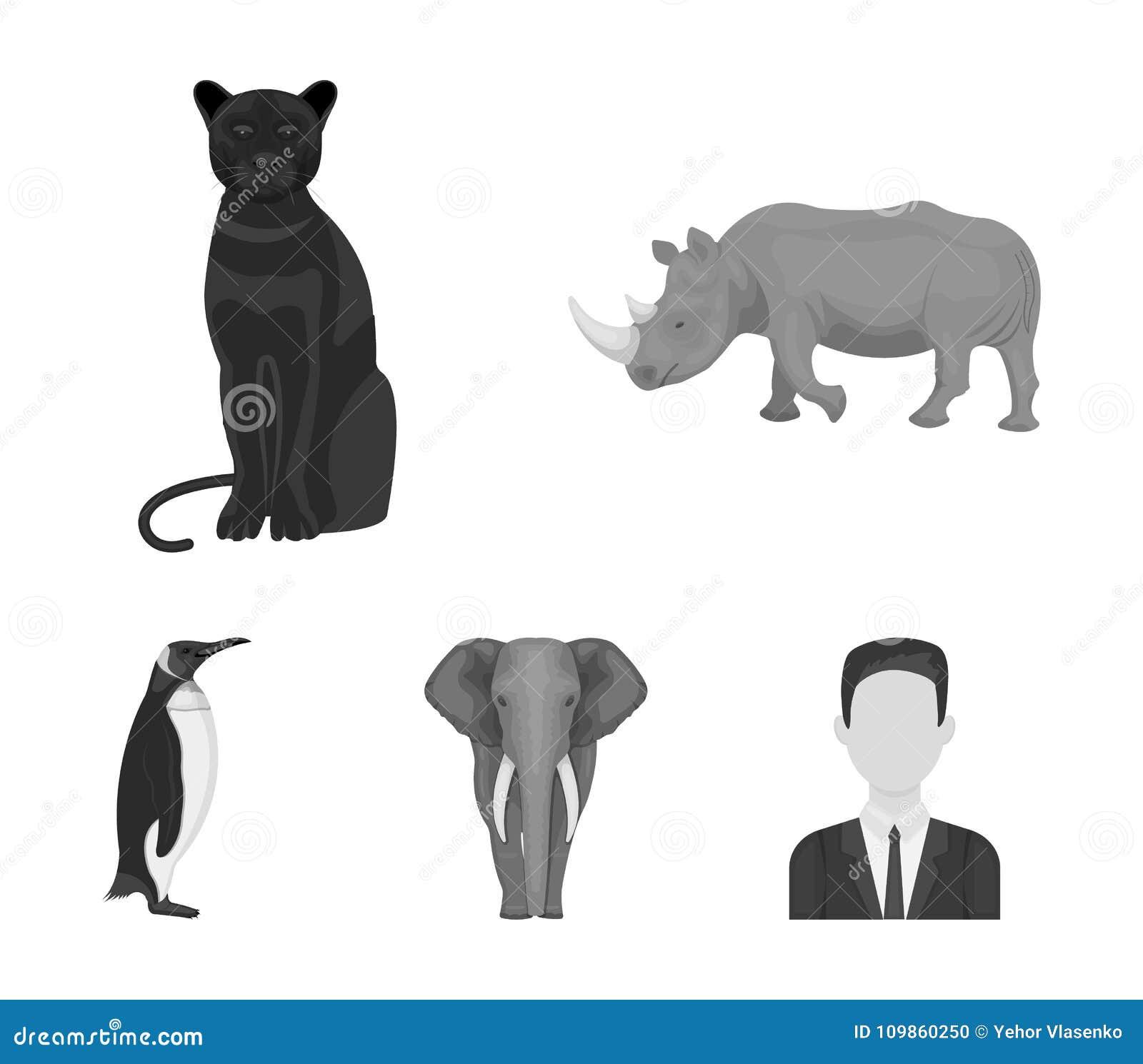 africano nero micio com