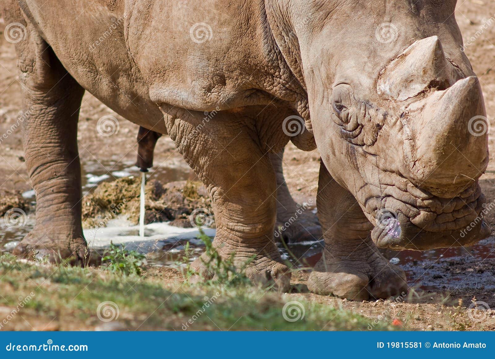 Rinoceronte Imgenes De Archivo, Vectores, Rinoceronte