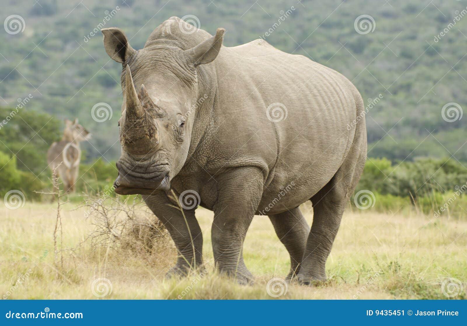 Rinoceronte y Waterbuck