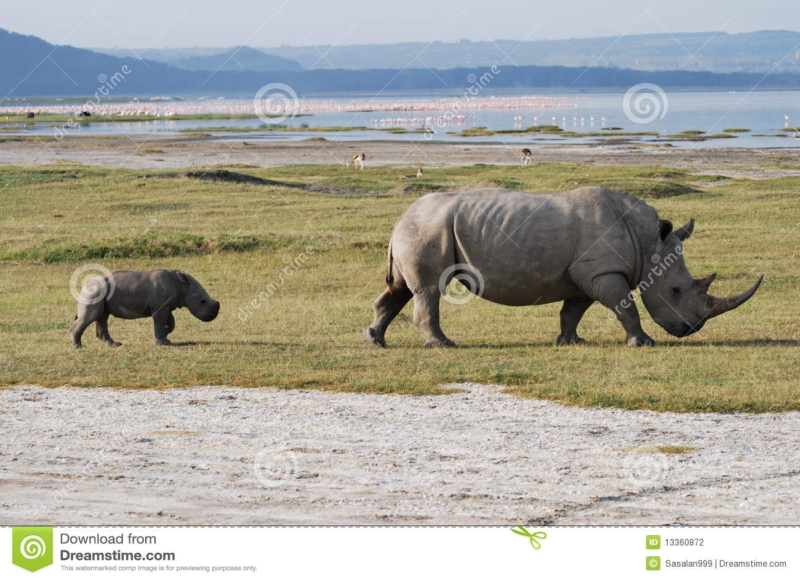 Rinoceros en Baby