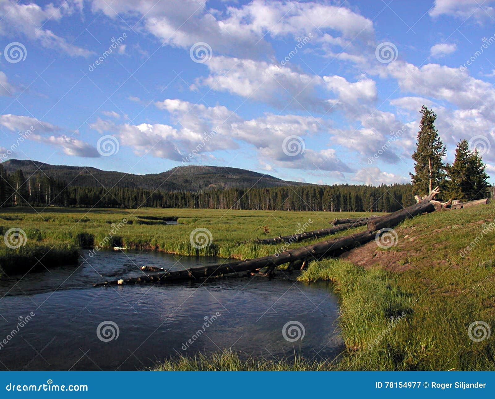 Rio de Gibbon de Norris Campground no parque nacional de Yellowstone