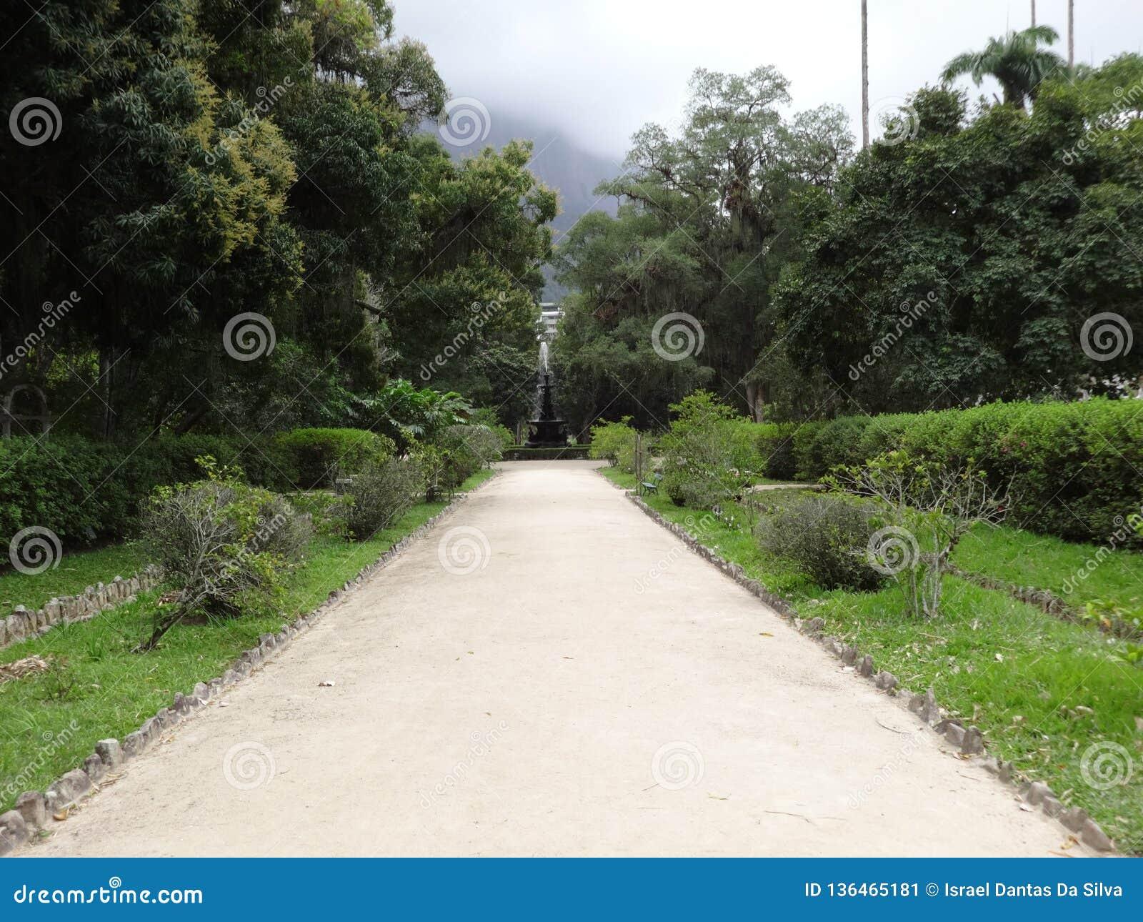 Rio de Janeiro Botanical Garden Way