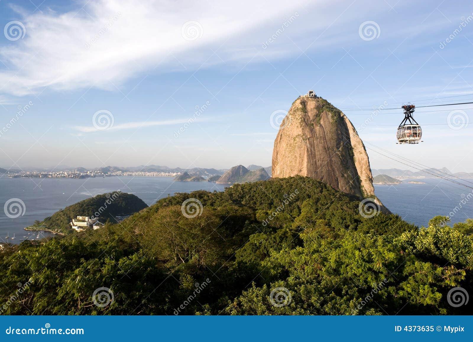 Rio de Janeiro mięczaka cukru,