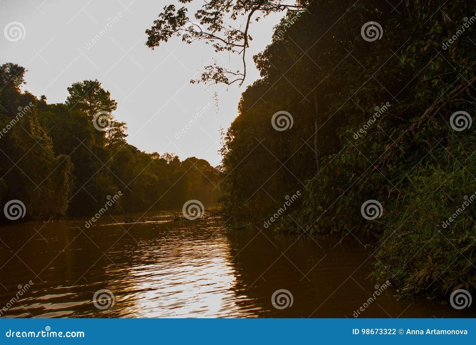 Rio de Kinabatangan, floresta úmida da ilha de Bornéu, por do sol Sabah Malaysia