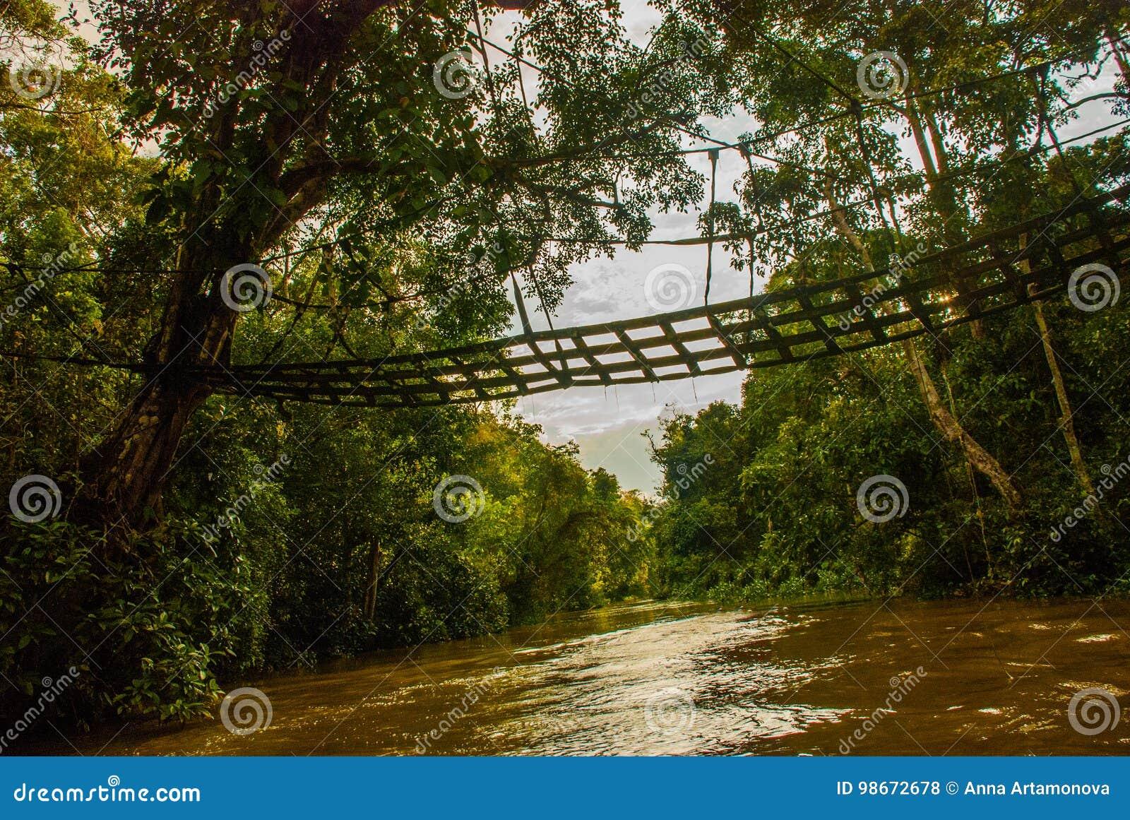 Rio de Kinabatangan, floresta úmida da ilha de Bornéu, Sabah Malaysia