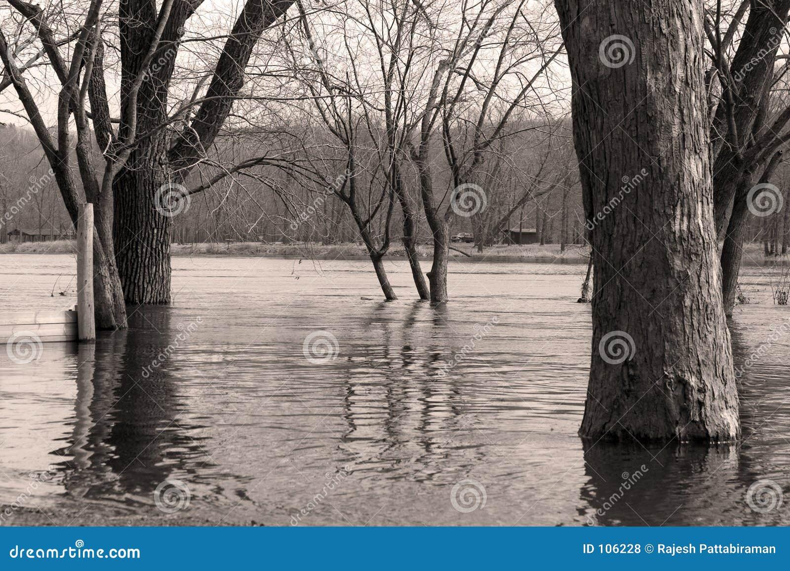 Rio e árvores preto e branco