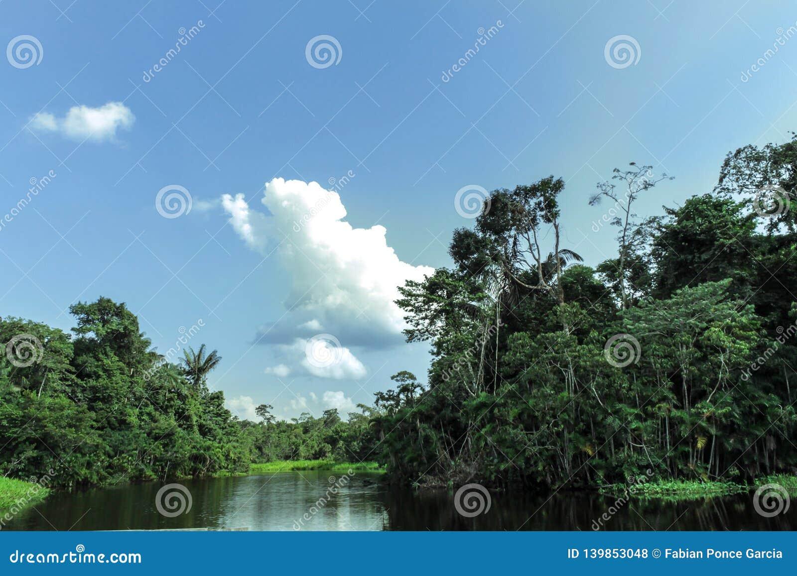 Rio no meio das Amazonas com vegetação abundante