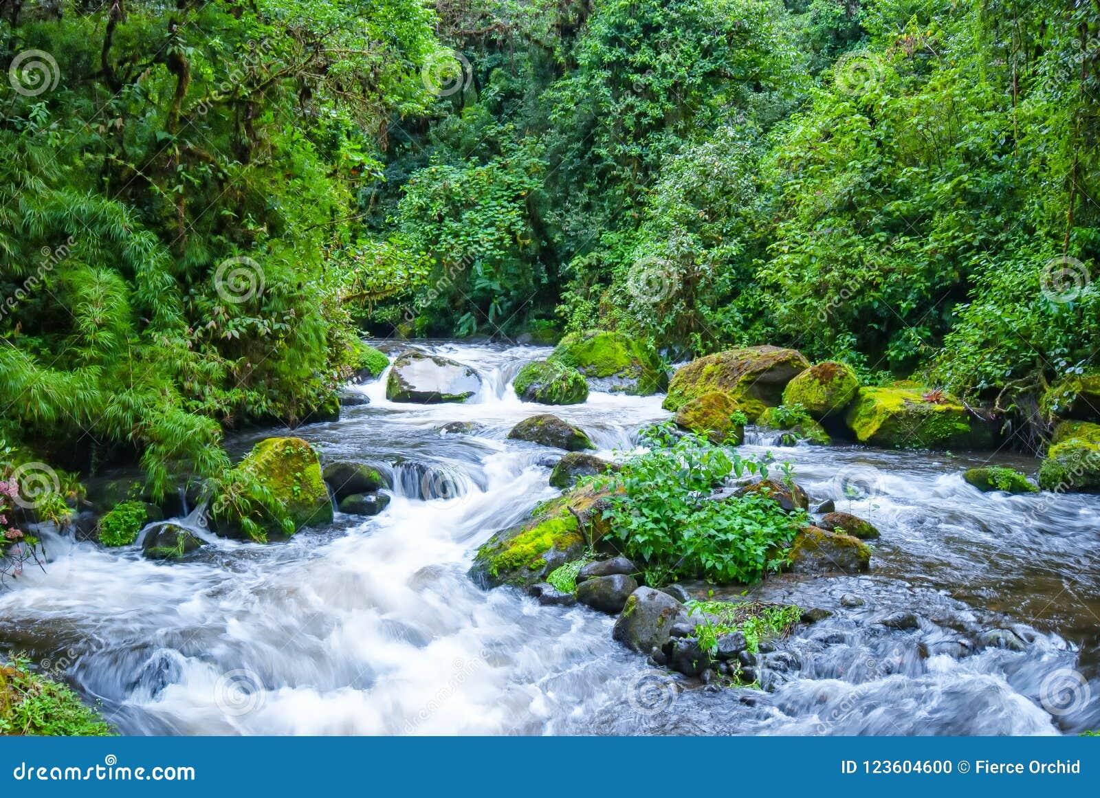 Rio Savegre, een gebrulrivier dichtbij San Gerado DE Dota, Costa Rica