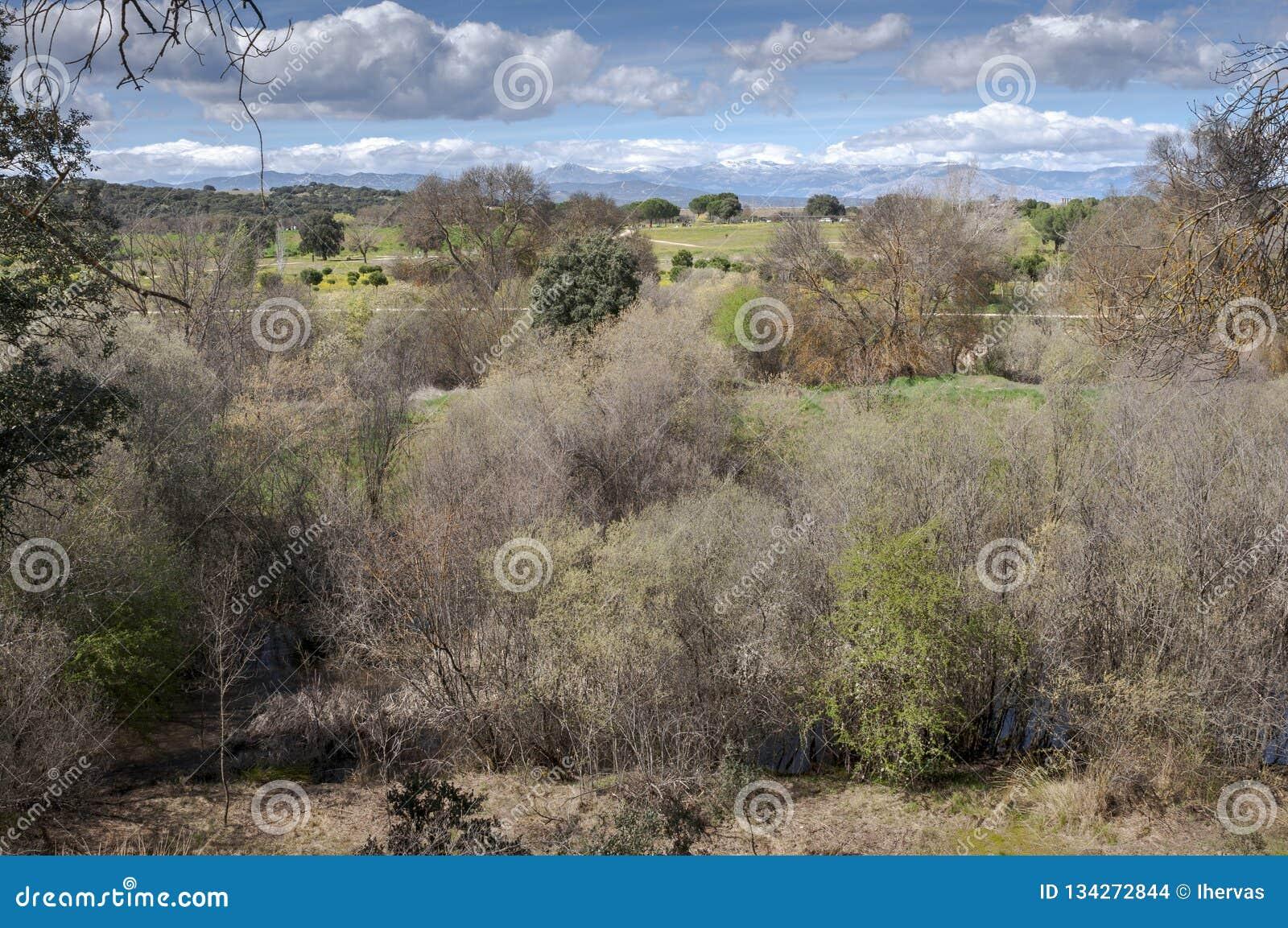 Riparian лес рядом с рекой Manzanares