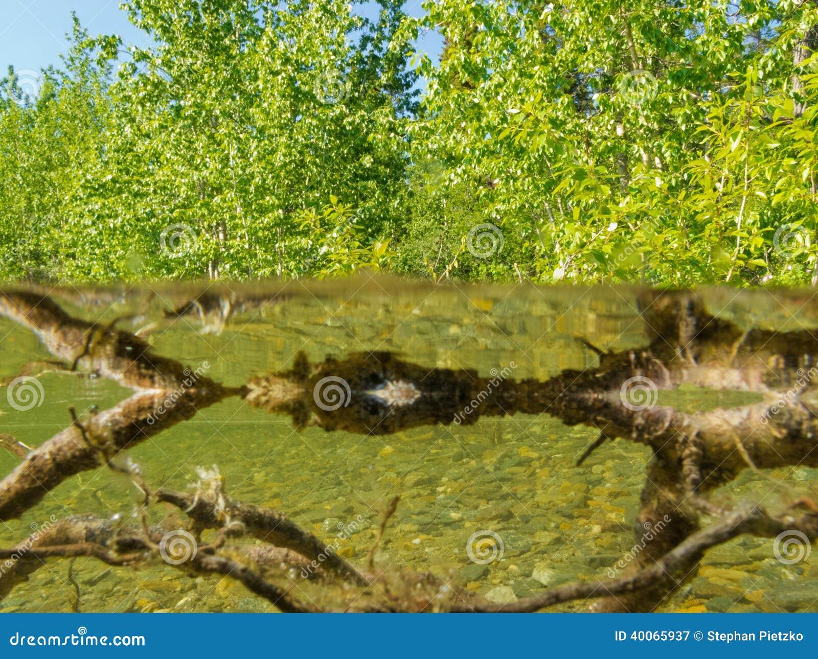 Riparian Ecosystem Taiga Lake Shallow Shore Water Stock Photo ...