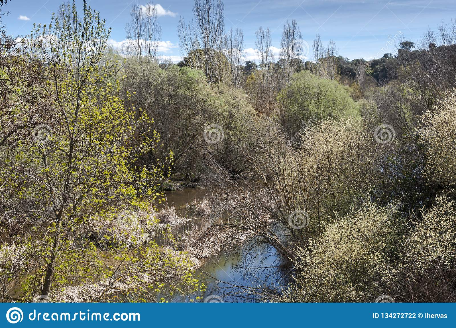 Riparian forest next to the river Manzanares