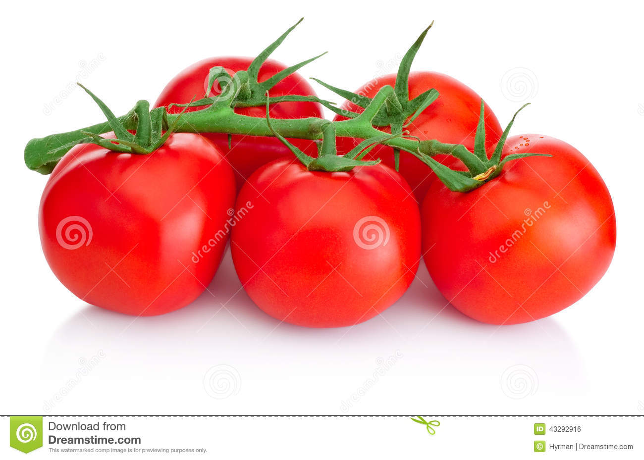 Ripe Cherry tomatoes on branch isolated on white background