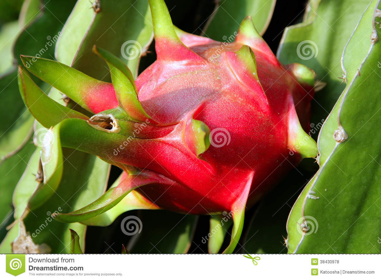 fruit list when is dragon fruit ripe