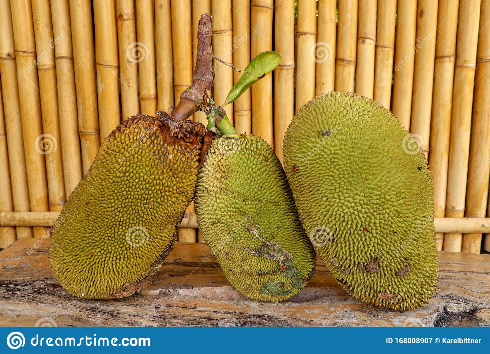 Ripe Fruits Of Jack Tree Whole Green Jack Fruit On A Robust Wooden Table With A Background With Bamboo Trunks Jackfruit On Wood Stock Image Image Of Cartoon Fruit 168008907 Find & download free graphic resources for jackfruit. dreamstime com
