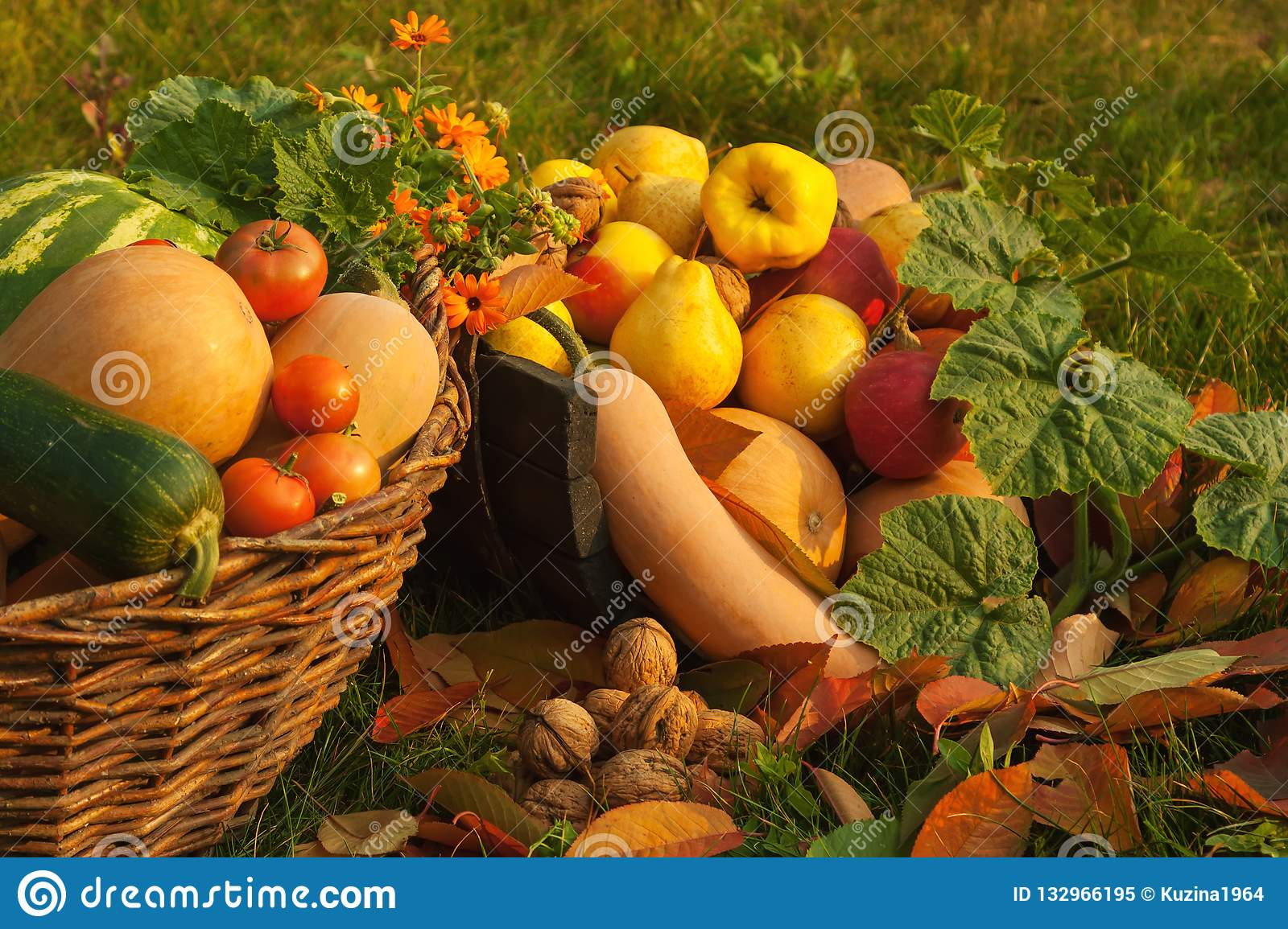Harvest In The Autumn Garden Stock Image Image Of Agriculture