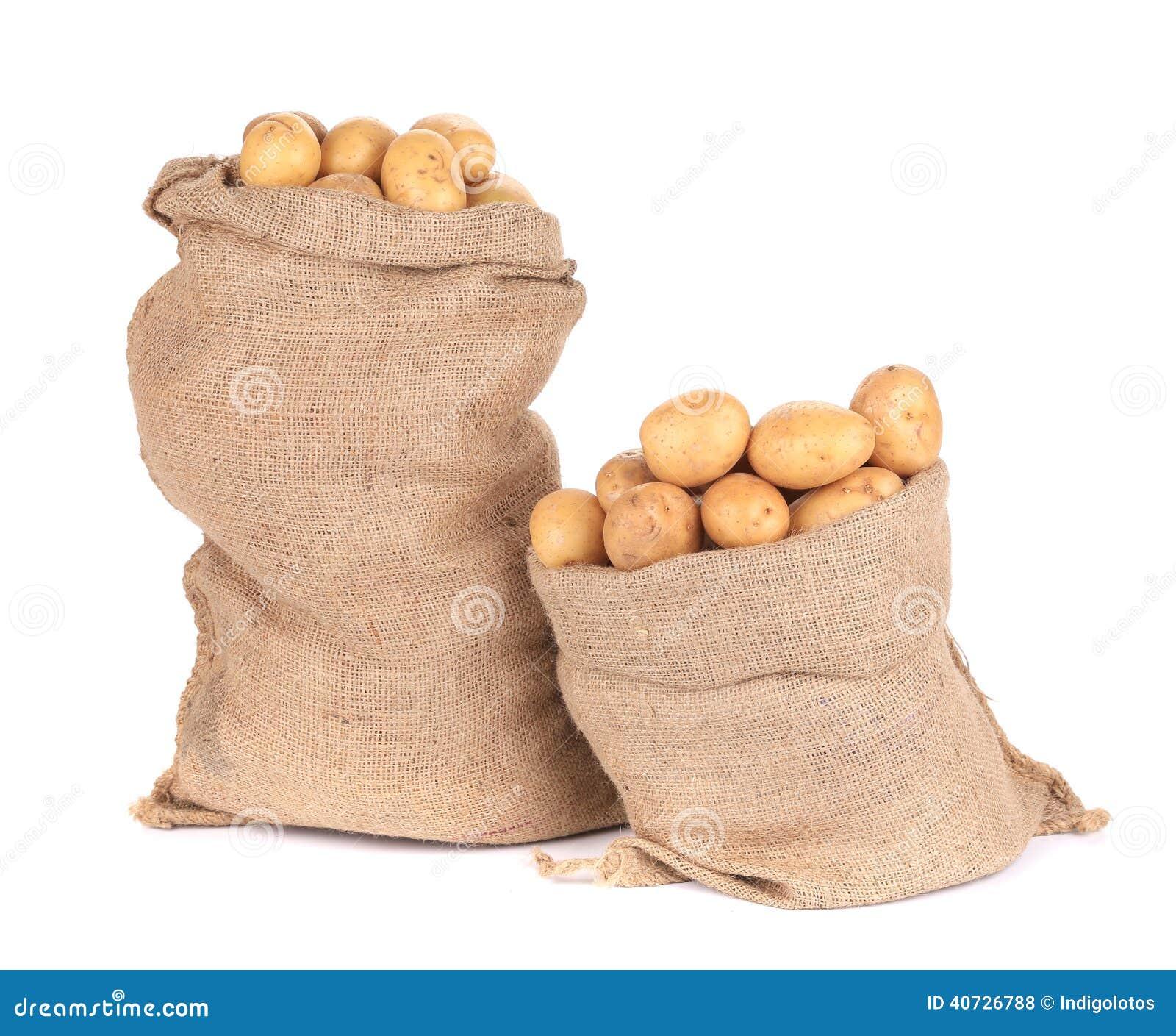 Ripe potatoes in burlap sacks.
