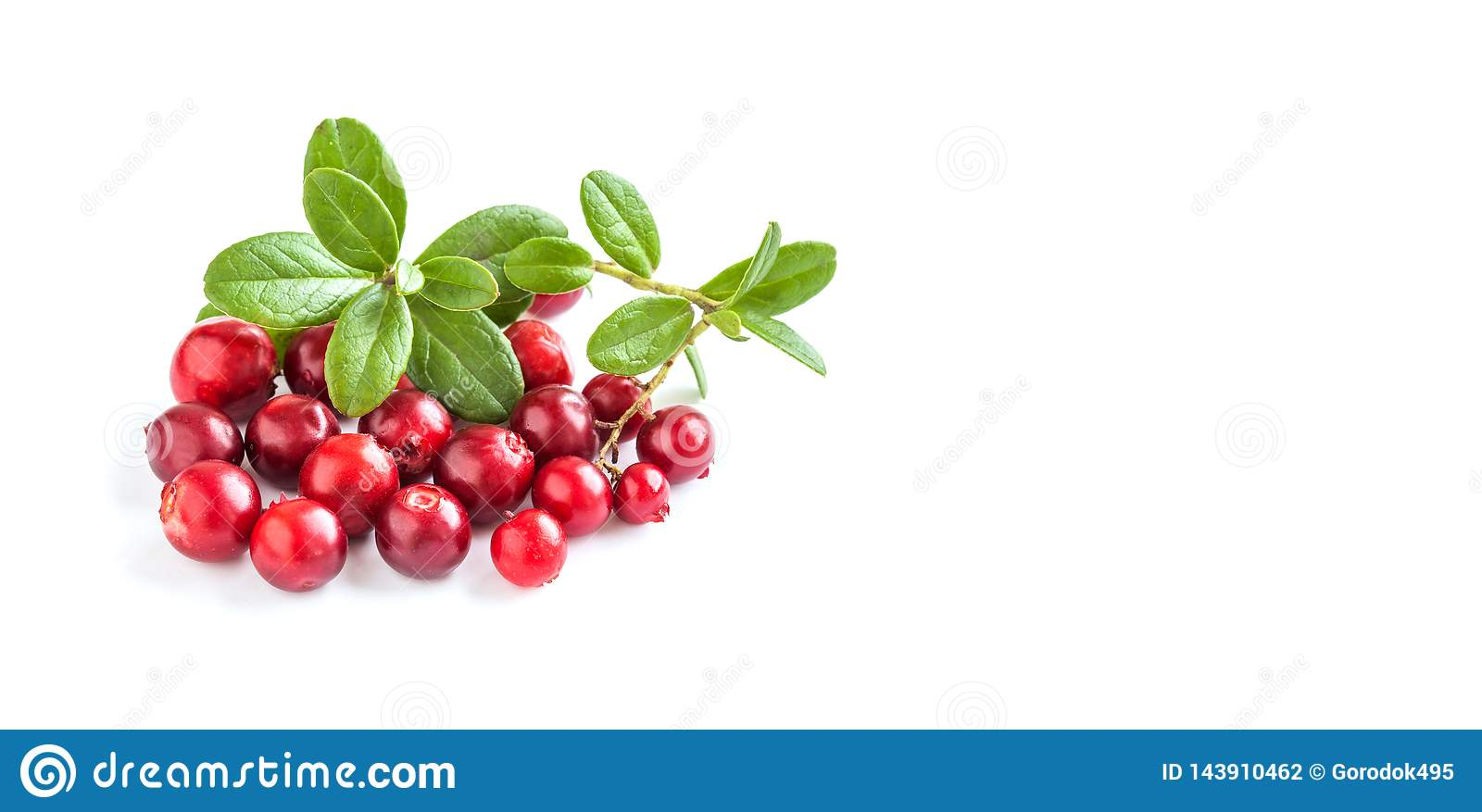 Ripe Red Cowberries Isolated On White Background. Fresh Berries ...