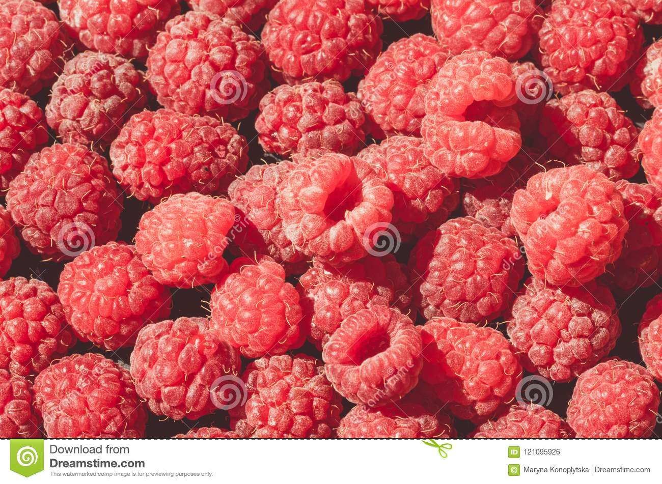 Ripe Red Raspberries Greeting Card With Fruits Stock Photo Image