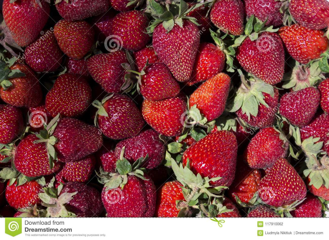 How are berries useful? 66