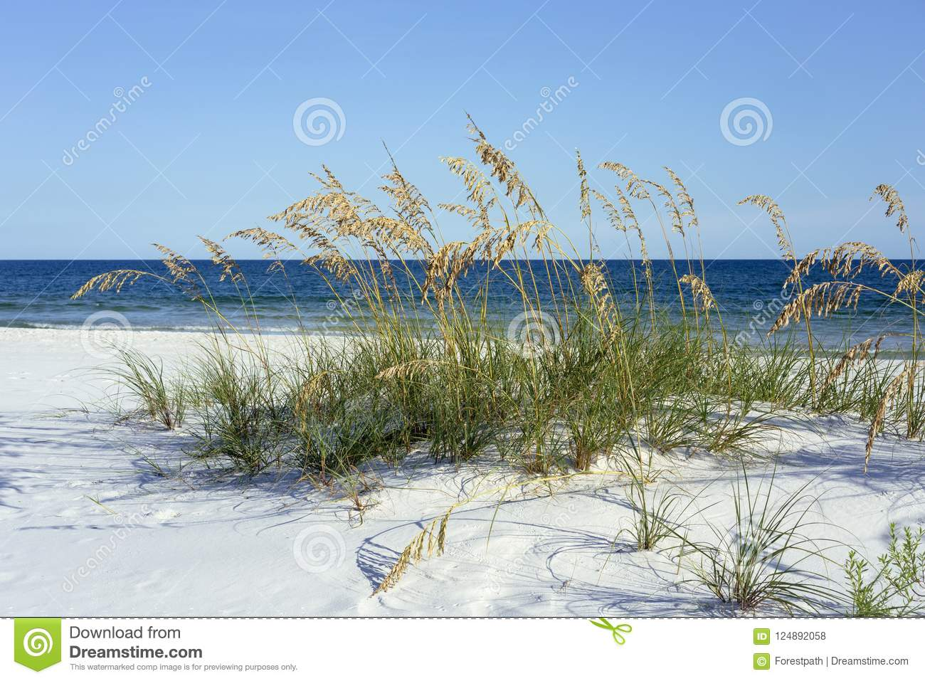 Pristine Florida Panhandle Beach with Sea Oats in Summer