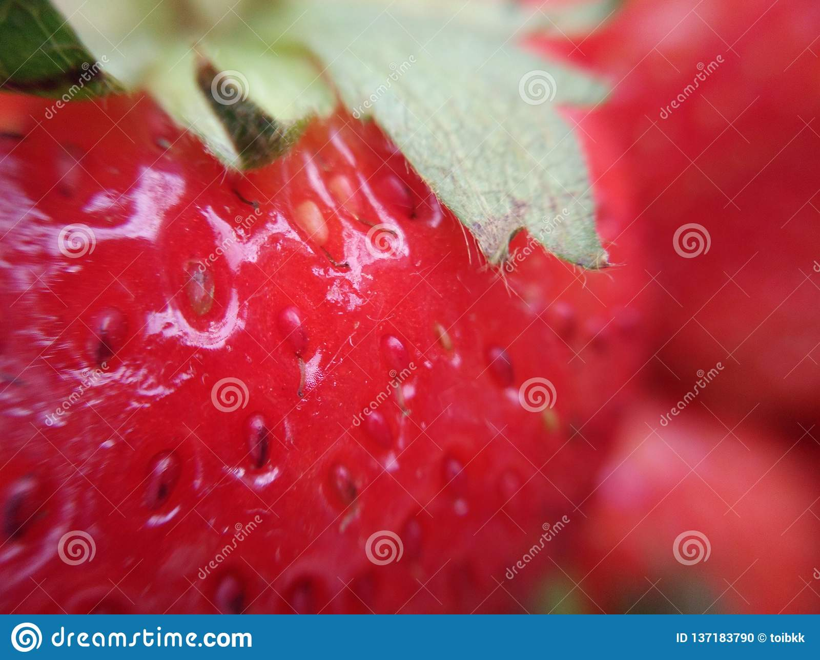 Ripe strawberry fruit with green sepal, macro