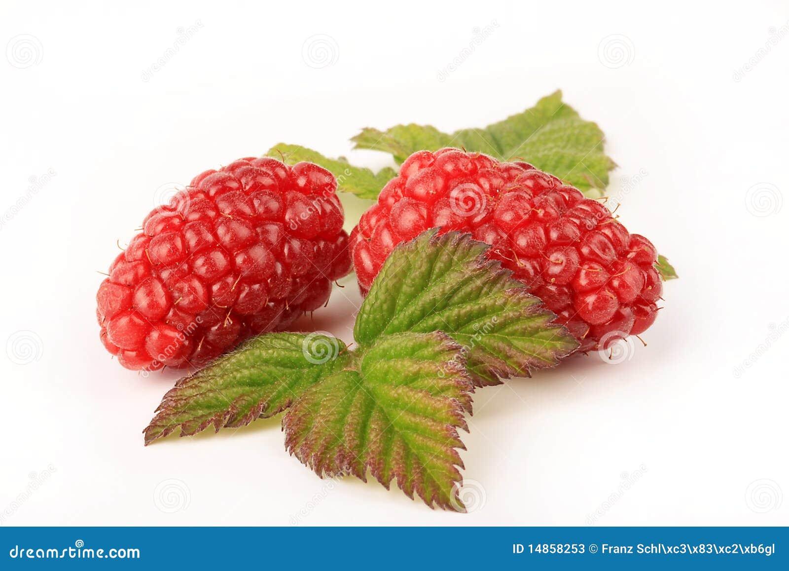 Ripe Tayberries