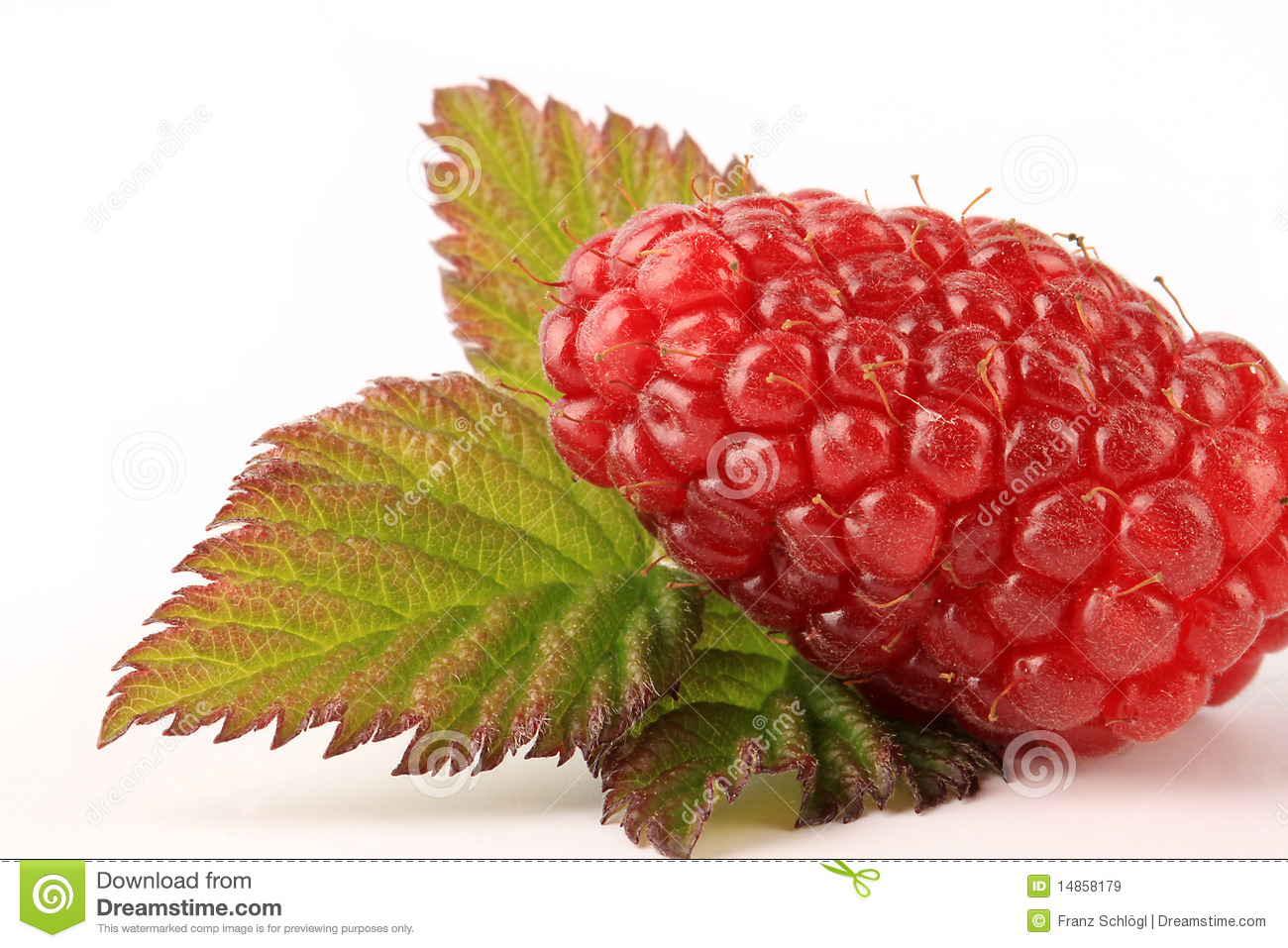 Ripe Tayberry