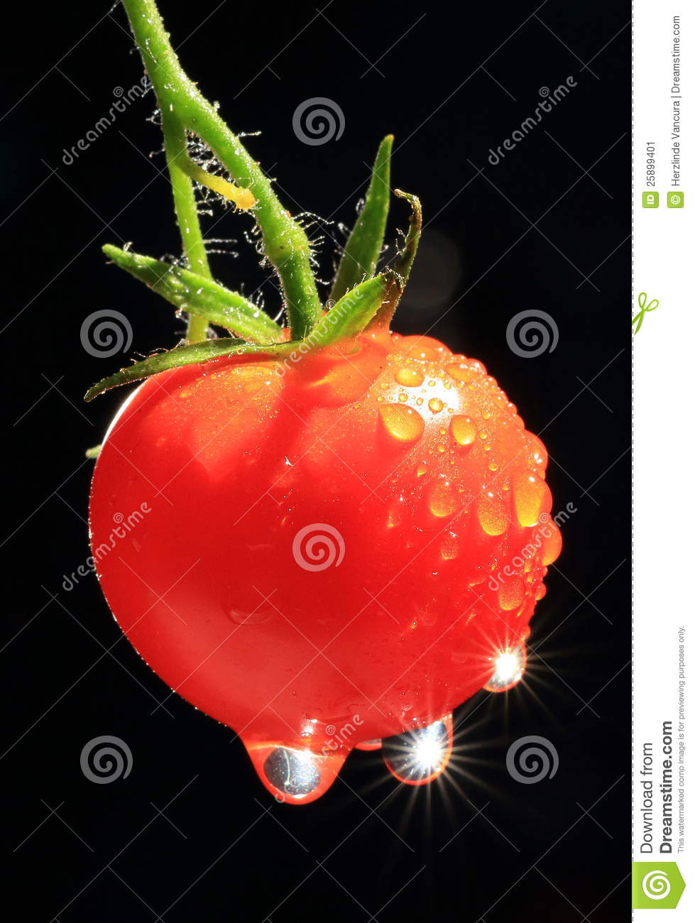 Download Ripe Tomato With Water Drops Stock Image - Image of freshness, drops: 25899401