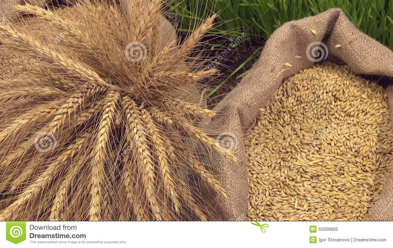wheat sack wall decor - HD 1300×821