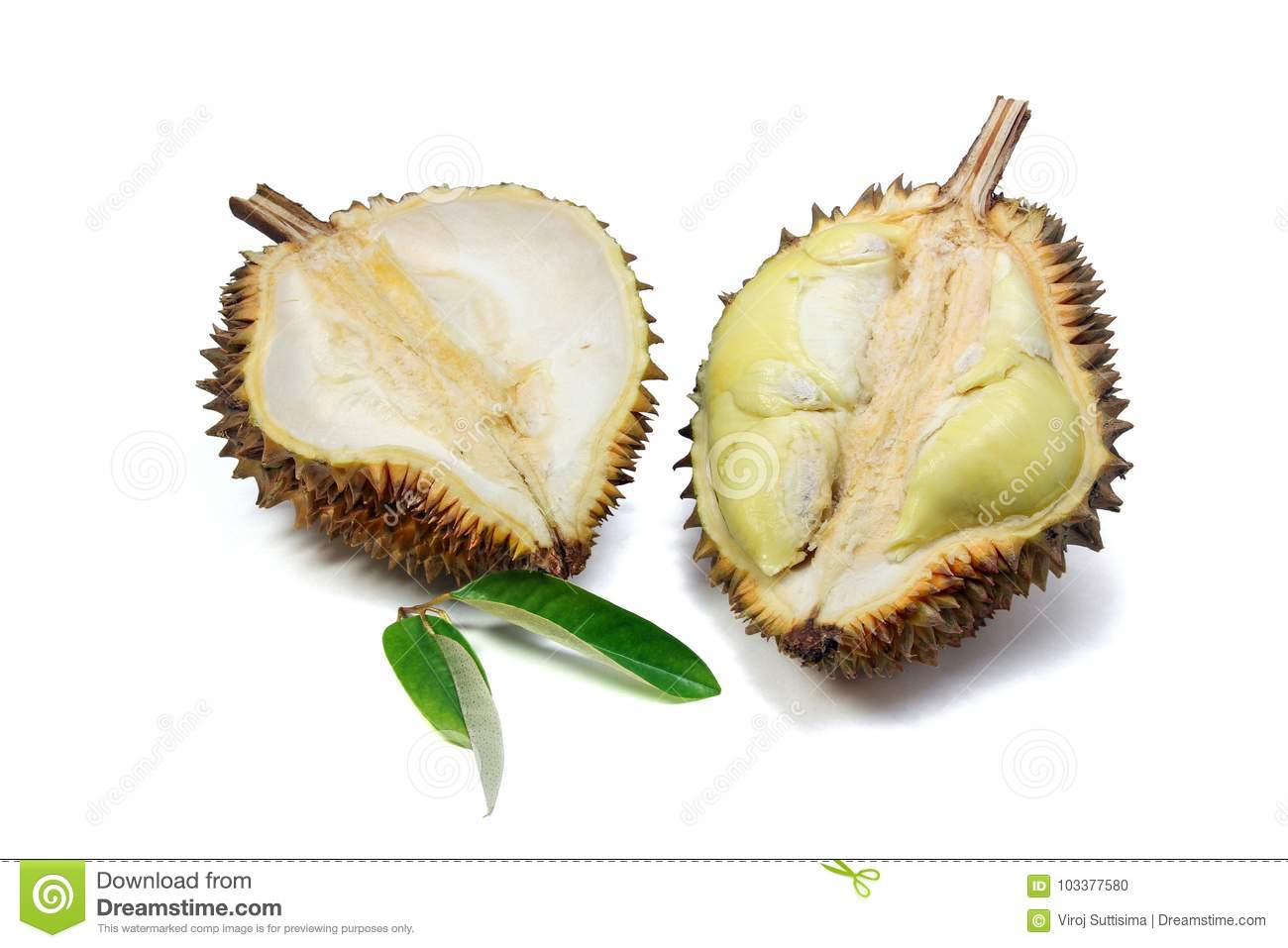 Ripe yellow flesh of Durian and Durian leaf on white background.