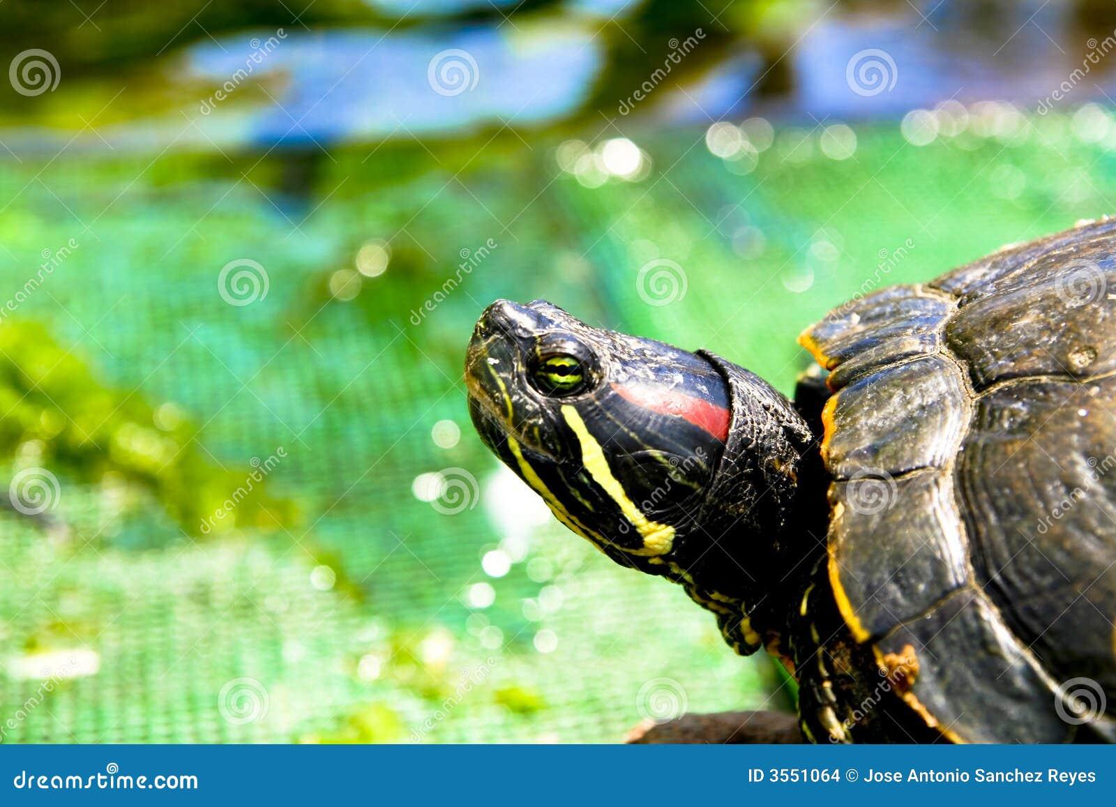 Riposo della tartaruga