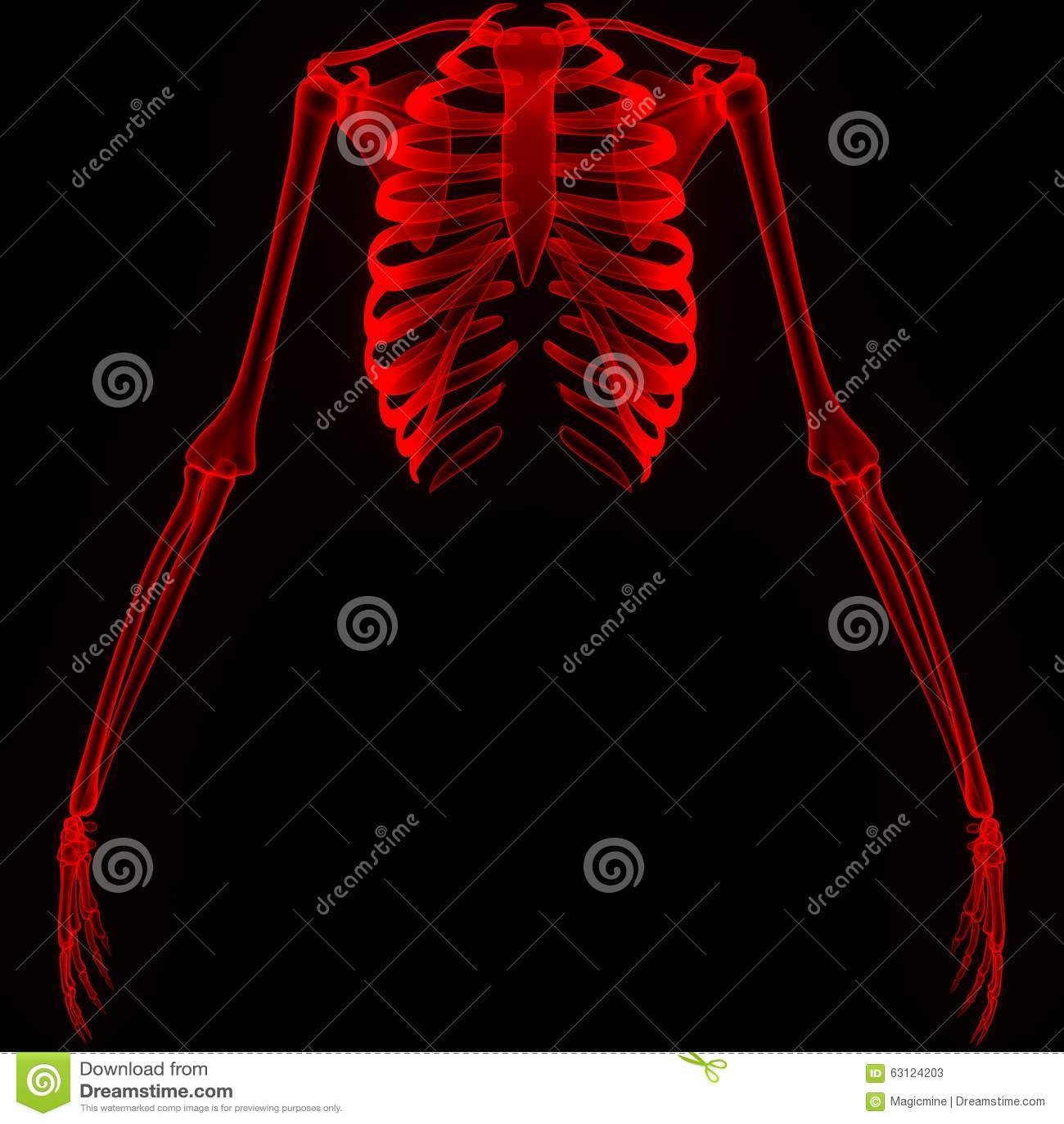 Rippen mit Handgelenken stock abbildung. Illustration von anatomie ...
