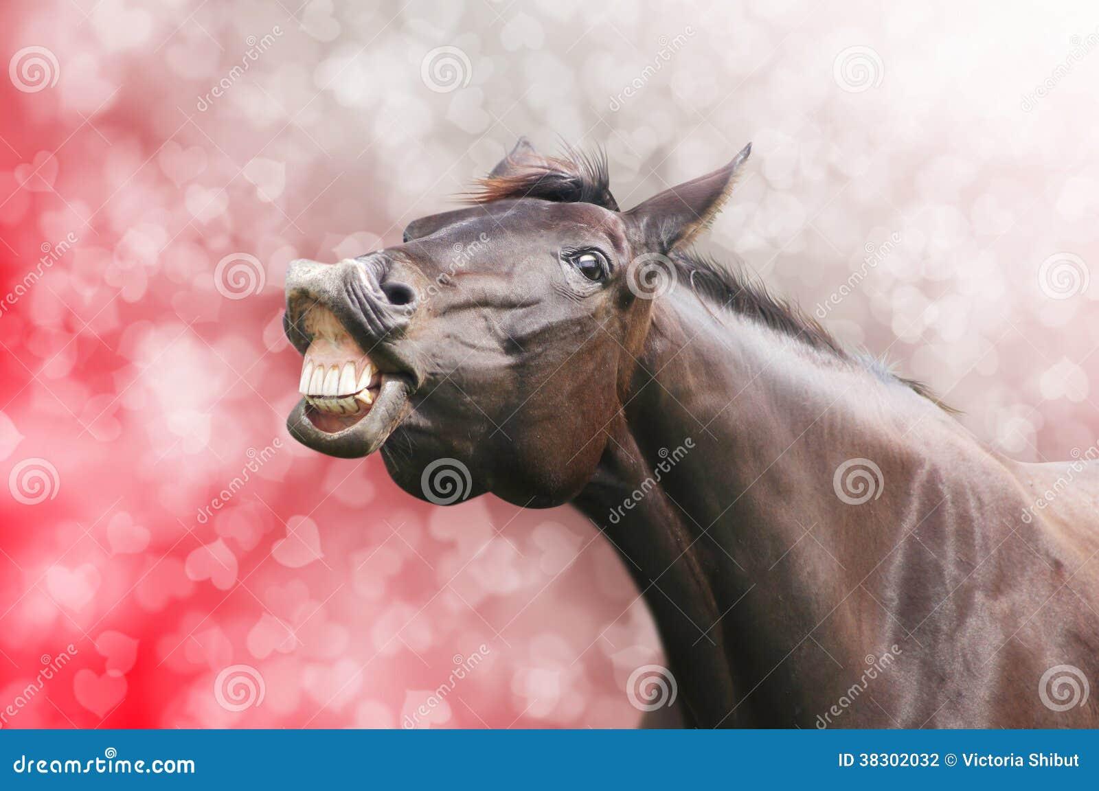 Rire de cheval sur le fond de vacances de coeur