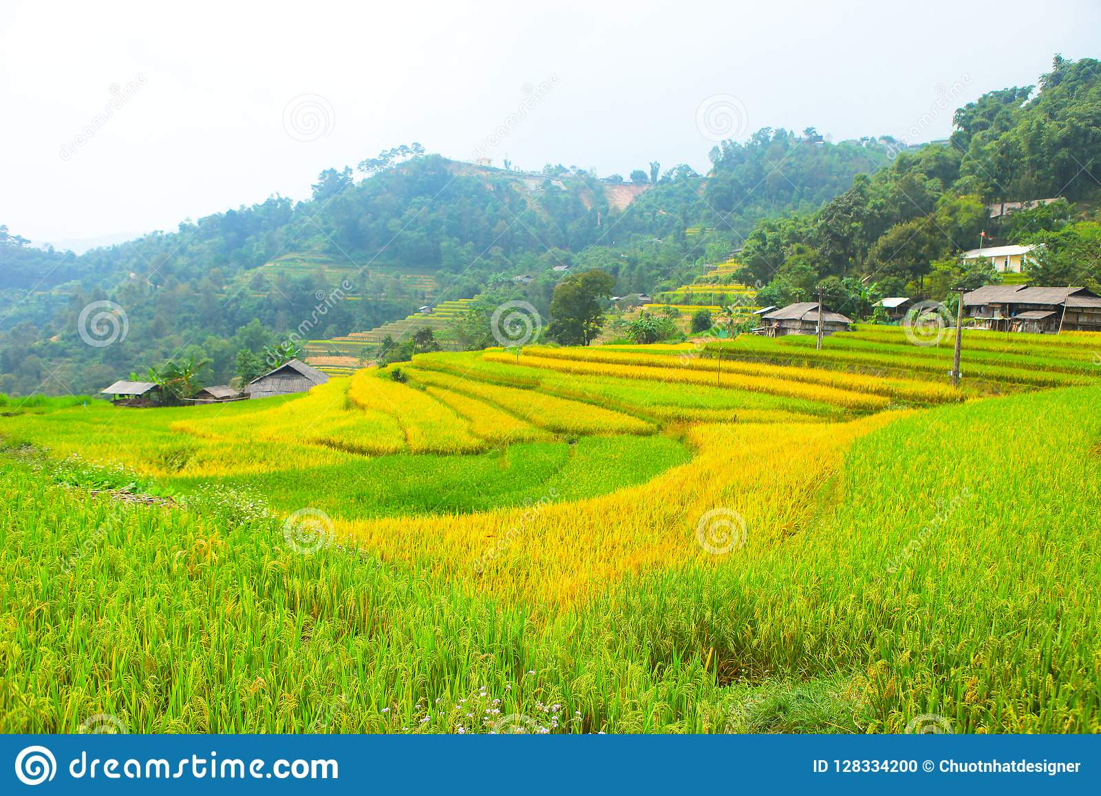 Risaie su a terrazze I campi sono preparati per la piantatura del riso Divieto Phung, Huyen Hoang Su Phi, provincia di Ha Giang I