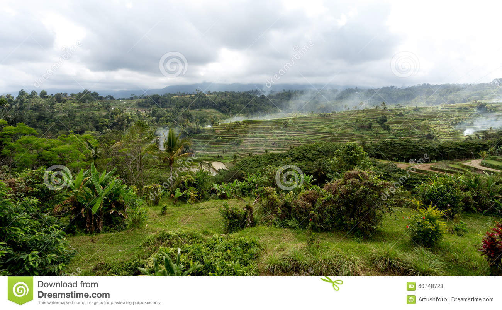 Risaie A Terrazze Del Riso In Bali Centrale Indonesia