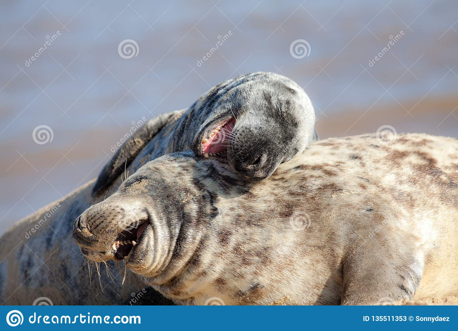 Risata fuori alto Immagine animale divertente del meme E