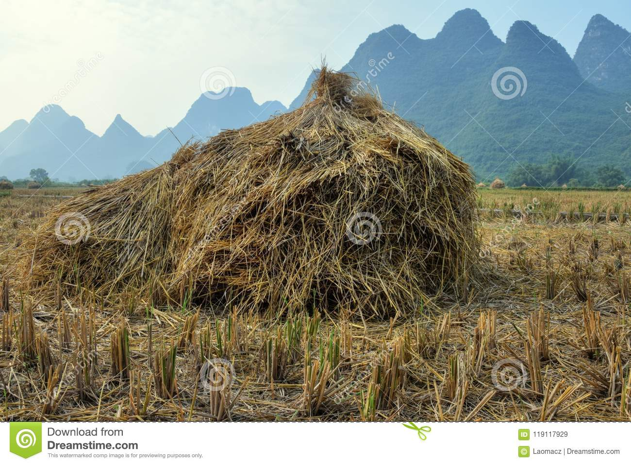 The Rise Harvest Time In Yangshuo China Stock Image