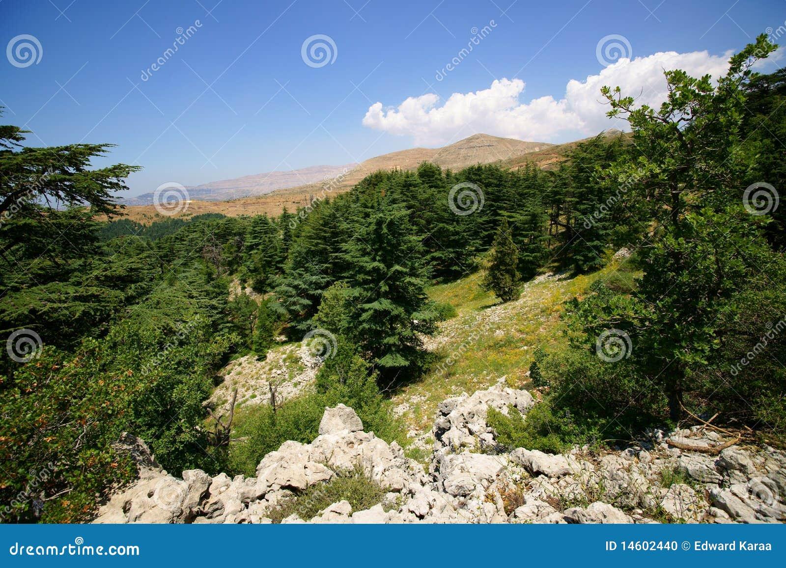 Riserva del cedro, Tannourine, Libano