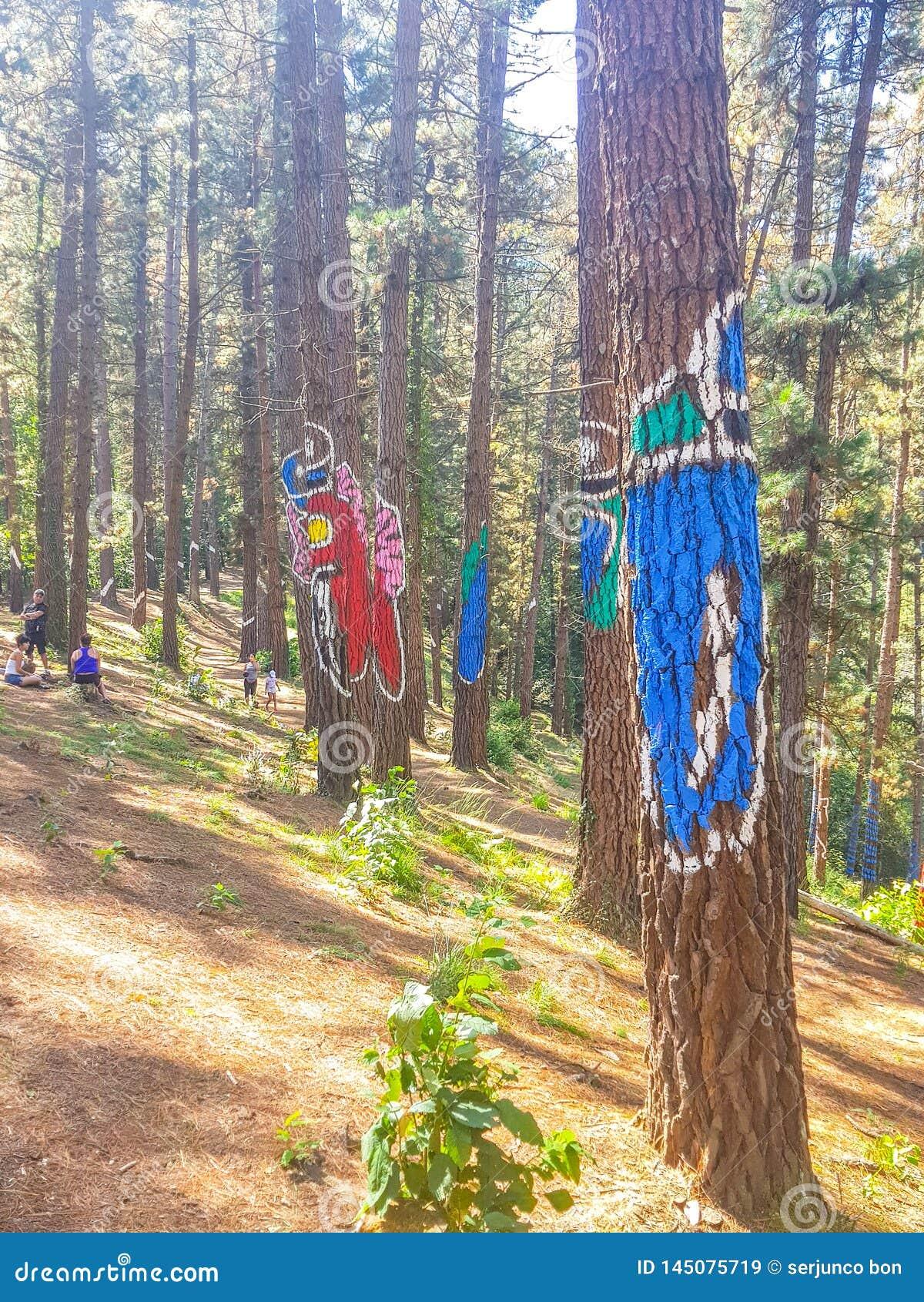 Riserva di biosfera di Urdaibai, Bizkaia, Spagna; 2018-04-16: Tronchi del pino dipinto in EL bosque de Oma