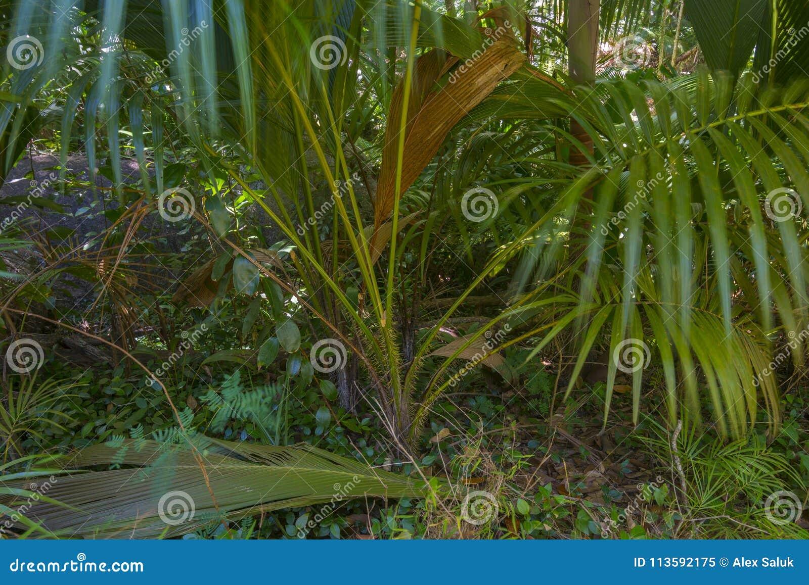 Riserva naturale affettuosa di Ferdinand, Seychelles