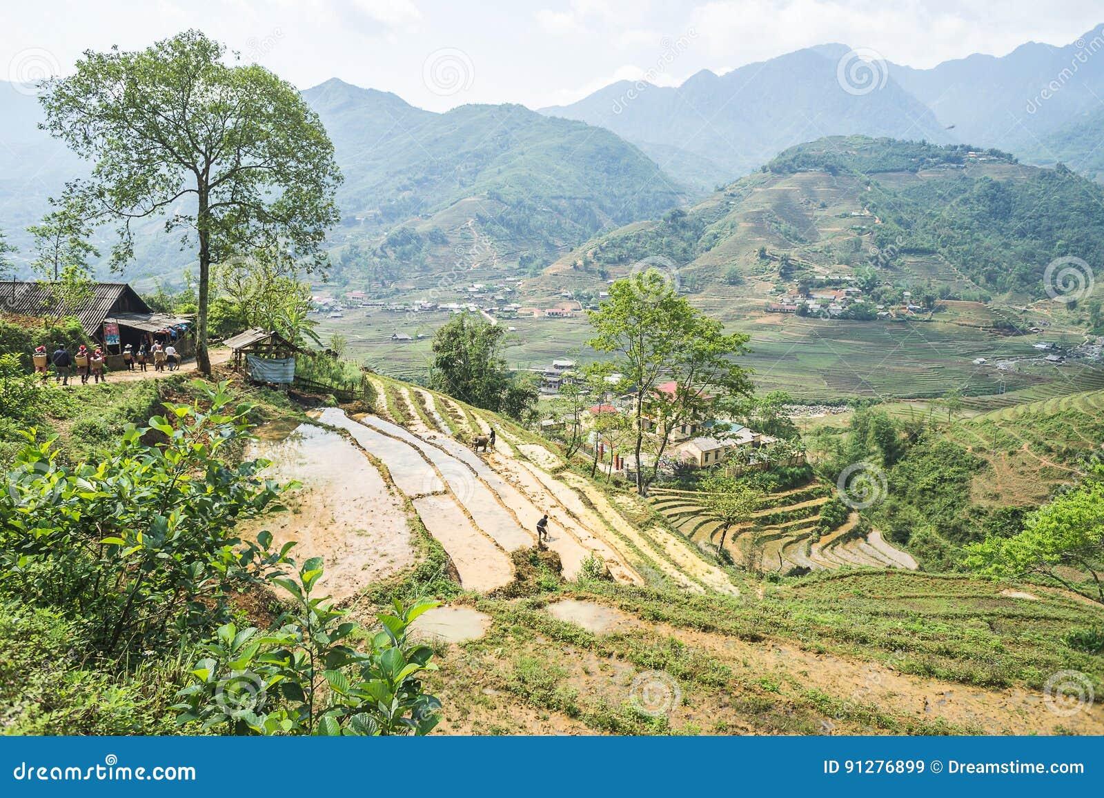 Risfält av Sapa, Vietnam