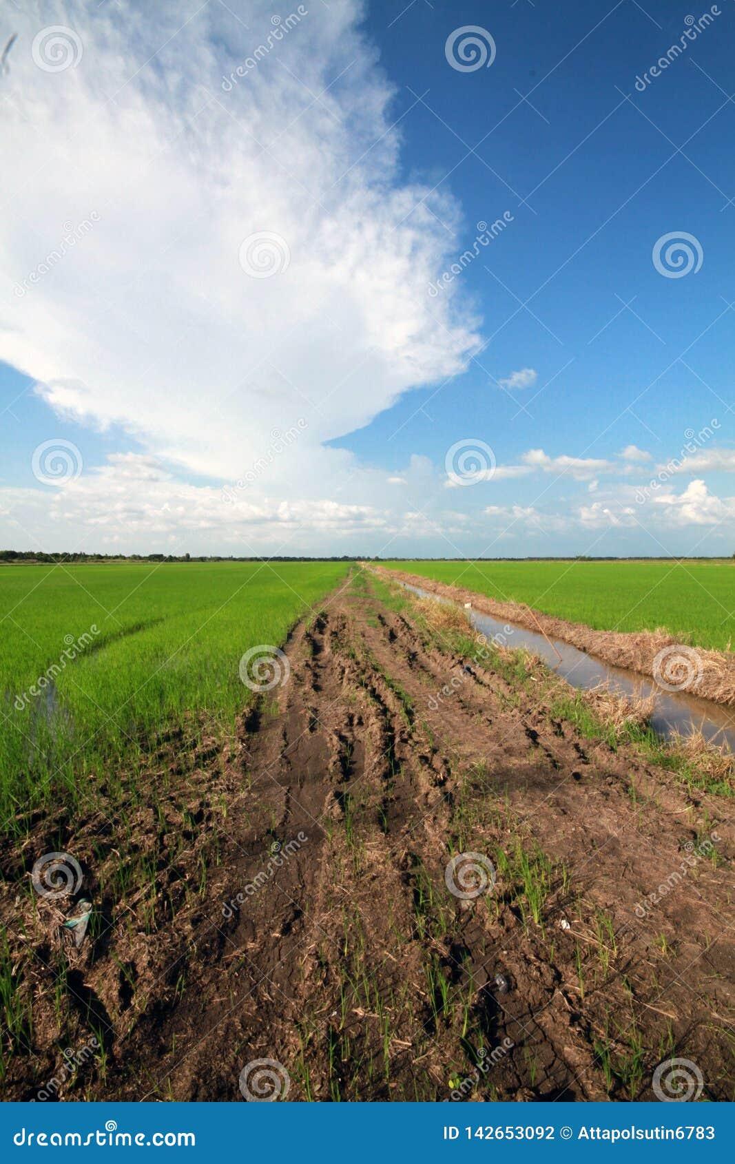 Risfält och himmel