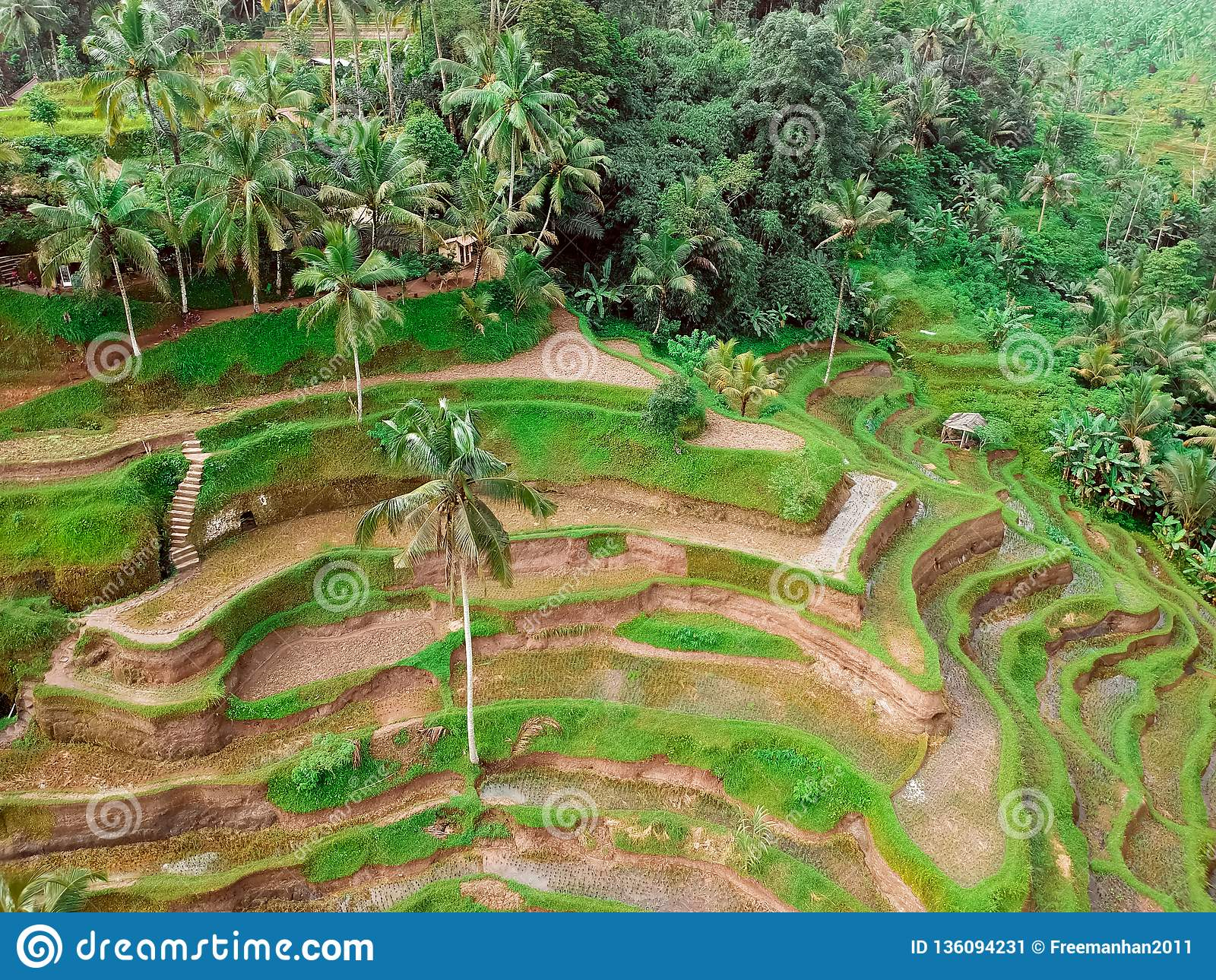 Risfält och skogar på Bali, sikten uppifrån